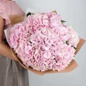 Букет 11 веток пышной розовой гортензии R704