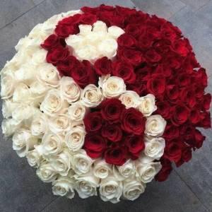 Коробка 101 роза красная и белая R1254