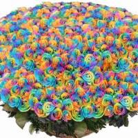 501 радужная роза в корзине R020