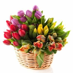 Корзина 39 ярких разноцветных тюльпанов R287
