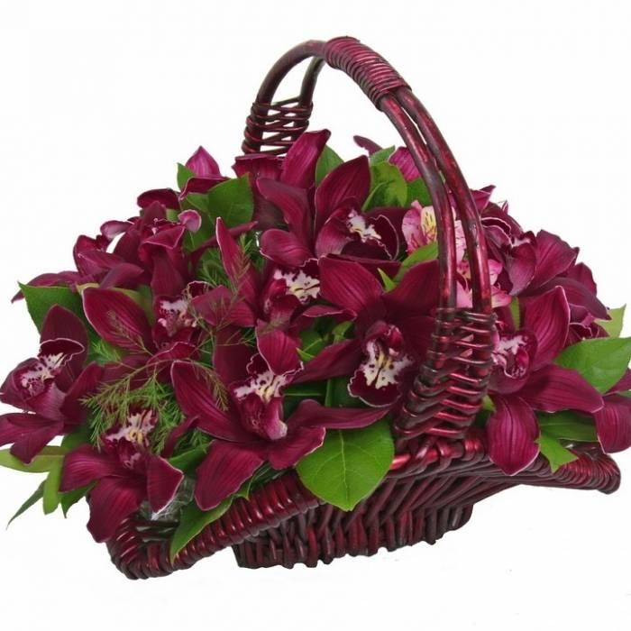 19 крупных винных орхидеи в корзине R003